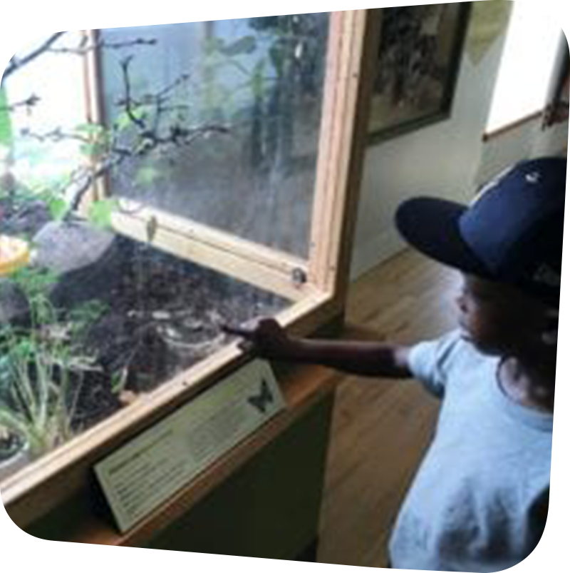 Child pointing to animal tank in bug exhibit