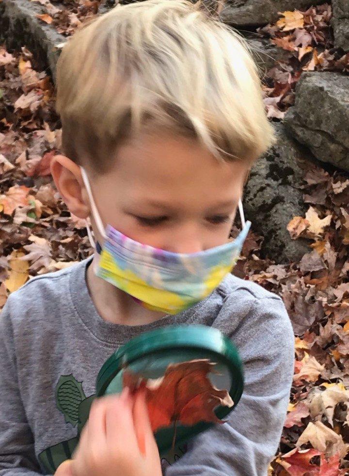 child examining a leaf